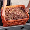 Prawn Trawlers have made the decision not to trawl in the Hunter River until the contamination issues at Newcastle's Williamtown Air Force  are rectified, not wishing to damage their brand by providing contaminated seafood.